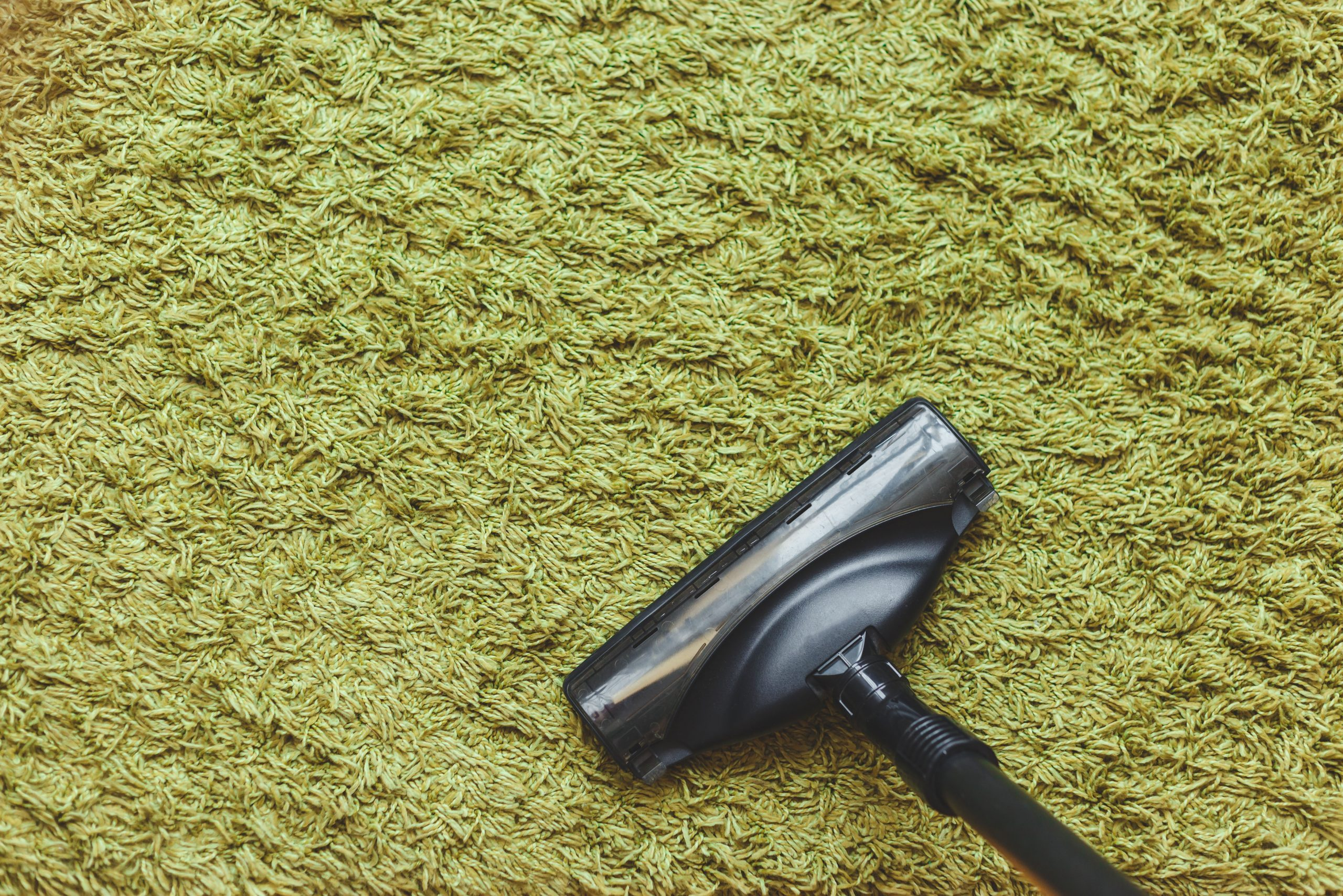 Pilgrim Payne's Guide To: Rug Cleaning